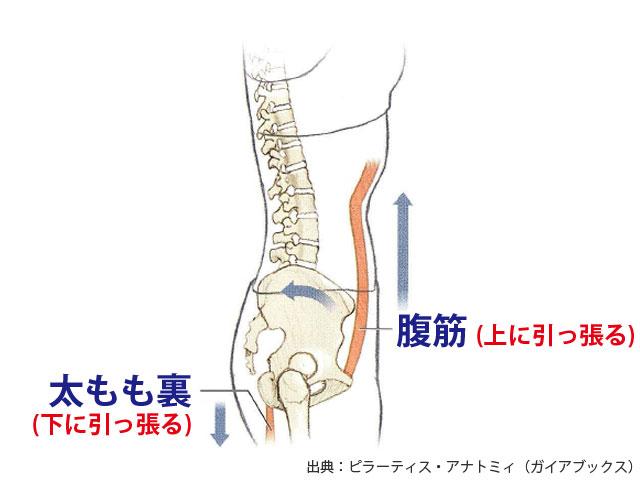 筋肉が正常な状態
