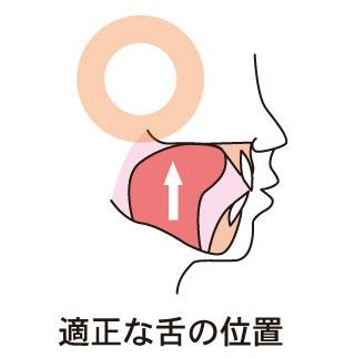 適正な舌の位置