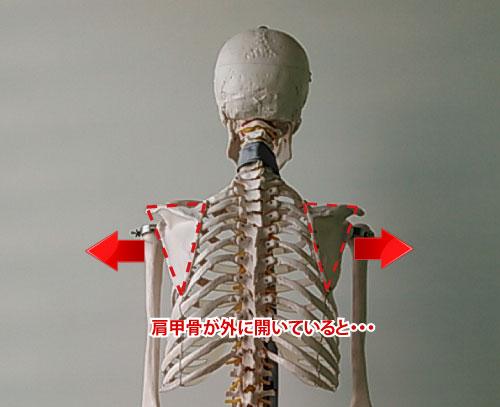 肩甲骨が外に開いている