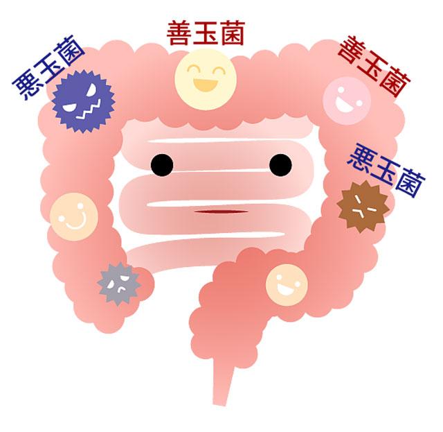 腸内細菌イメージ