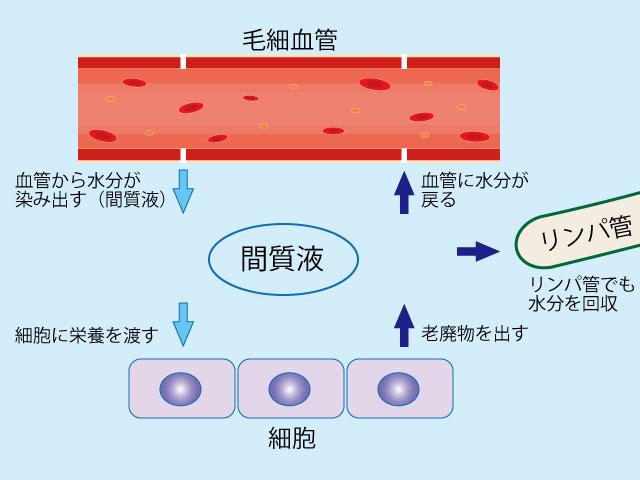 血管と細胞は間質液でやり取りする