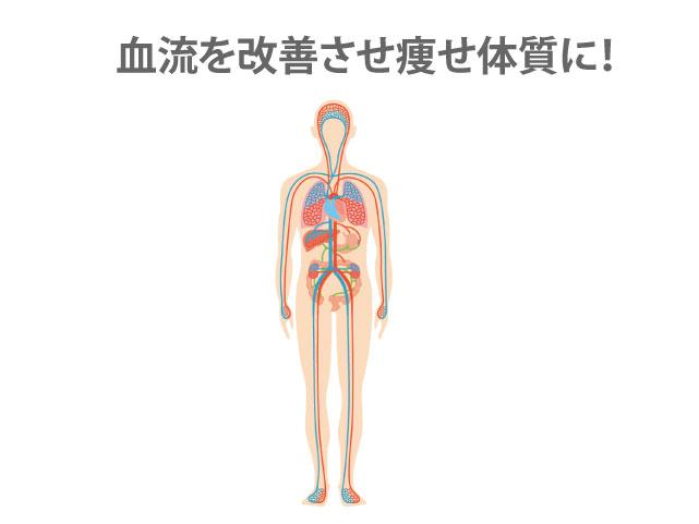 血流を改善させ痩せ体質に